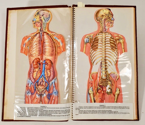 1958 Trans-visions of Anatomical Chromographs, Medical, Anatomy Chart Book
