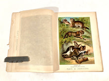 Load image into Gallery viewer, 1880 JOHNSON'S HOUSEHOLD BOOK OF NATURE, Mammlia, Illustrated