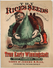 Load image into Gallery viewer, Rice's Seeds, True Early Winningstadt Cabbage Advertising Lithograph, Jerome B. Rice