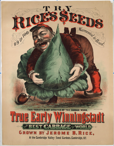 Rice's Seeds, True Early Winningstadt Cabbage Advertising Lithograph, Jerome B. Rice