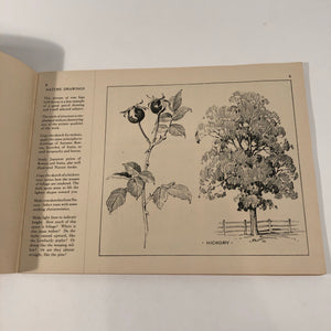 Flower illustration lesson in Industrial Applied Art Book