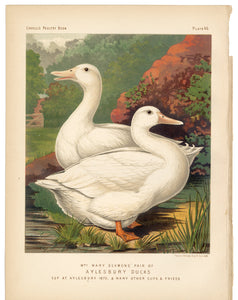 1886 Cassells Poultry Book Aylesbury Ducks Lithographic Print
