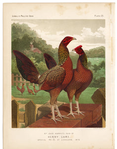 1886 Cassells Poultry Book Pair of Henny Game, Chicken Lithographic Print