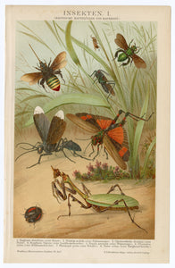 1895 Antique German Scientific Lithographic Print || Bugs, Mantis, Beetle, Flies