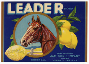 Vintage, Unused LEADER Brand Lemon Fruit Crate Label, Horse Head || Riverside, Ca.