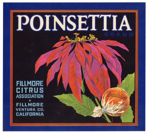 Vintage, Unused POINSETTIA Citrus Fruit Crate Label, Christmas || Fillmore, Ca.