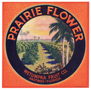 Vintage, Unused PRAIRIE FLOWER Citrus Fruit Crate Label || Hastings, Florida