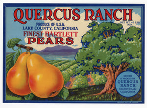 Vintage, Unused QUERCUS RANCH Brand Pear, Fruit Crate Label || Kelseyville, Ca.