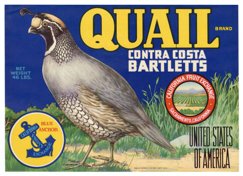 Vintage, Unused QUAIL Brand Pear, Fruit Crate Label || Contra Costa, Sacramento, Ca.
