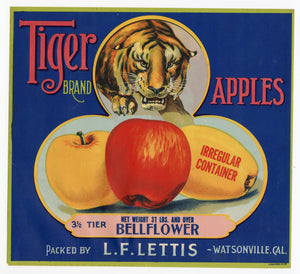 Vintage, Unused TIGER Brand Apple Crate Label, Bellflower || Watsonville, Ca.