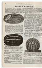 Load image into Gallery viewer, 1931 Vintage BUTZER'S Seeds, Plants & Flowers Catalogue, Gardening, Farming