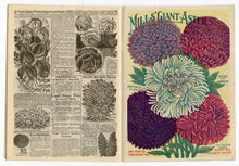 Load image into Gallery viewer, 1908 Antique MILL'S Seed Catalog, Rose Hill, NY, Farming, Gardening, Plants, Flowers