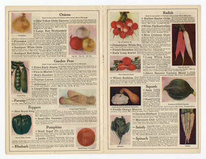 1920's Antique QUALITY SEED CATALOG, Detroit, Jack & Beanstalk, Farming, Gardening