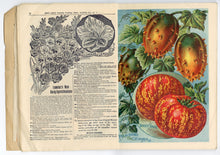 Load image into Gallery viewer, 1898 Victorian CHILDS' SEED CATALOG, Floral Park, NY, Gardening, Farming, Flowers