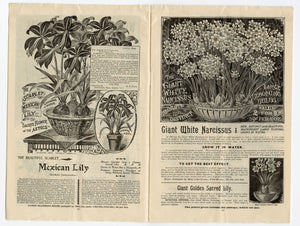 1900 Antique A GUIDE TO ROSE CULTURE Seed Catalog, West Grove,Pa., Flowers, Garden