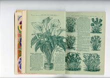 Load image into Gallery viewer, 1900 Antique CHILDS' SEED CATALOG, Floral Park, NY, Garden, Farm, Flowers