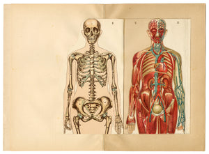Antique Dutch Anatomical Female Body Reference Book, Moveable Plates, Skeleton, Organs