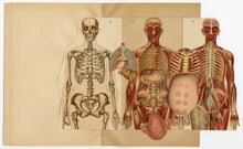 Load image into Gallery viewer, Antique Dutch Anatomical Female Body Reference Book, Moveable Plates, Skeleton, Organs
