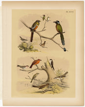 Load image into Gallery viewer, 1878 Antique STUDNER'S POPULAR ORNITHOLOGY Original Small Bird Lithographic Plate