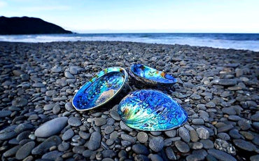 The great paua jewellery