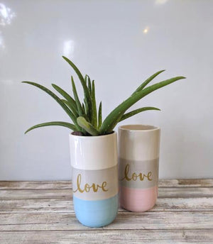Love in Aloe