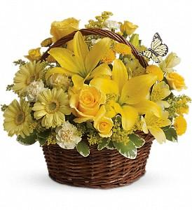 Bright yellow flowers in basket make the perfect get well flowers for delivery in Winnipeg.