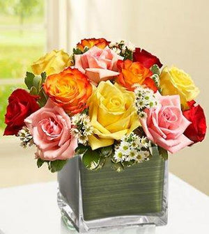 Modern Roses One Dozen Assorted