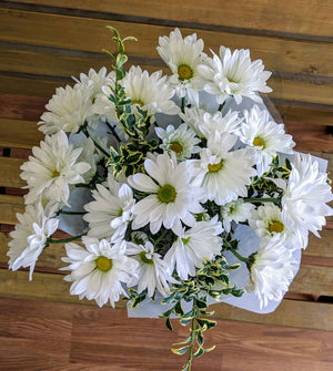 Solid Color Daisy Bouquet