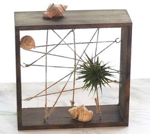 air plants delivered in winnipeg for fathers day