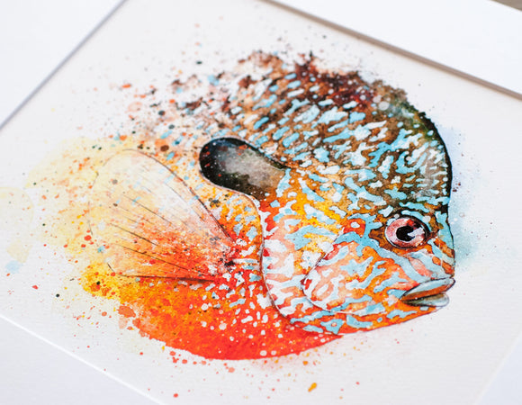 Longear Sunfish Watercolor