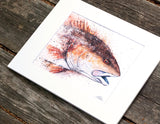 Redfish Profile Watercolor