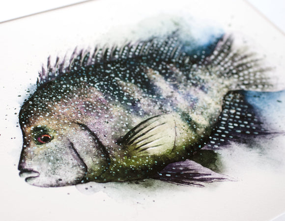 Rio Grand Cichlid Watercolor