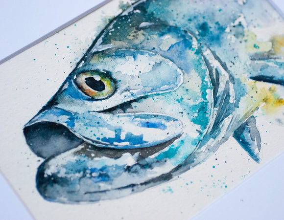 Tarpon Watercolor