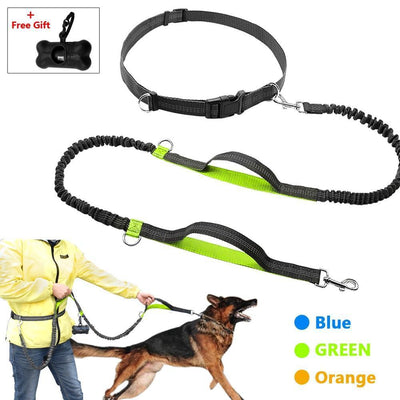 Collars and Leashes Bungee Dog Leash Green