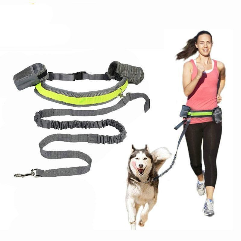 Collars and Leashes Hands Free Bungee Dog Leash Black