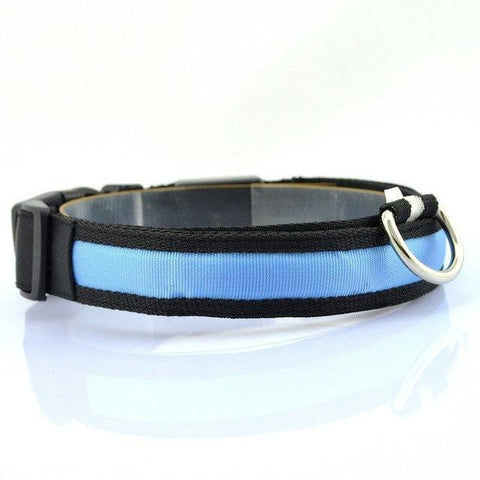 Collars and Leashes Safety LED Collar Blue / S
