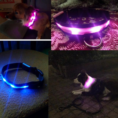 Image of Collars and Leashes Safety LED Collar White / S