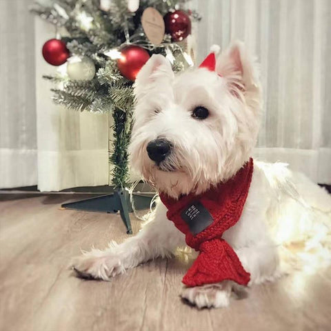 Image of Dog Christmas Christmas  Accessories - Christmas Scarf Warm Winter Pet Dog Scarves Dogs Bow Tie Collars Green / S Under 4.5KG