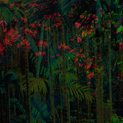 Daintree Tropical Rainforest Wall Mural by Back to the Wall