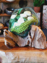 Load image into Gallery viewer, Large Hand Blown Molten Glass on Teak Driftwood