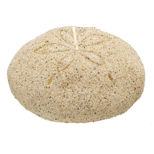 Shell Shaped Candle - Sand Dollar - CW 516
