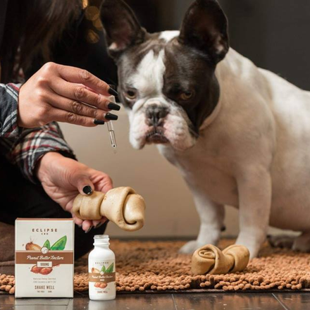 CBD Products and Small Dogs: What Research is Starting to Show