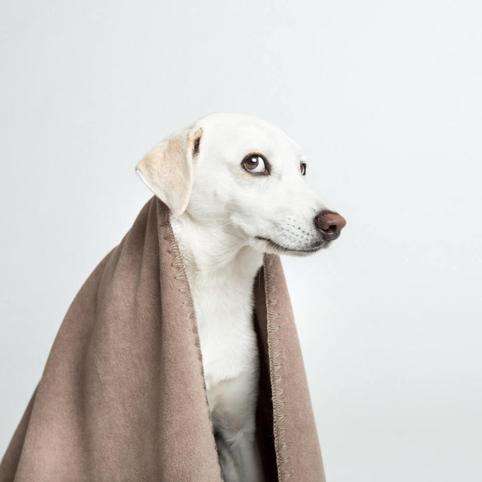 Soft Fleece Dog Blanket - CONTEXT-4