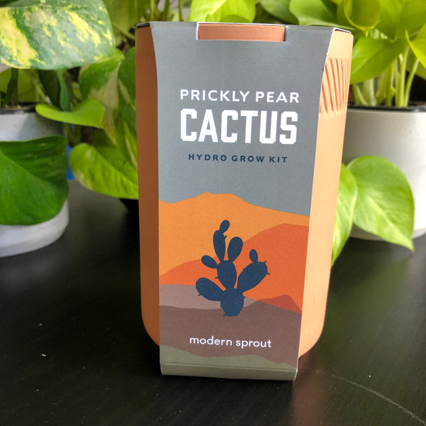 Terracotta Plant Kit - Palm or Cactus