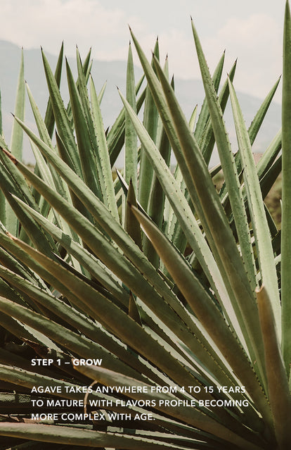 Step 1: Grow - close up on agave leaves.