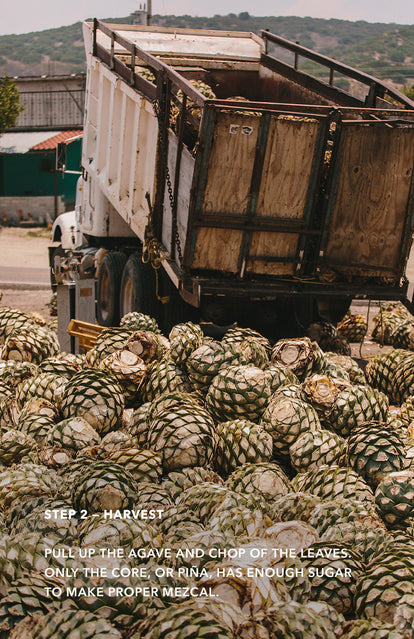Step 2: Harvest - pile of agave hearts being dumped off the back of a truck.