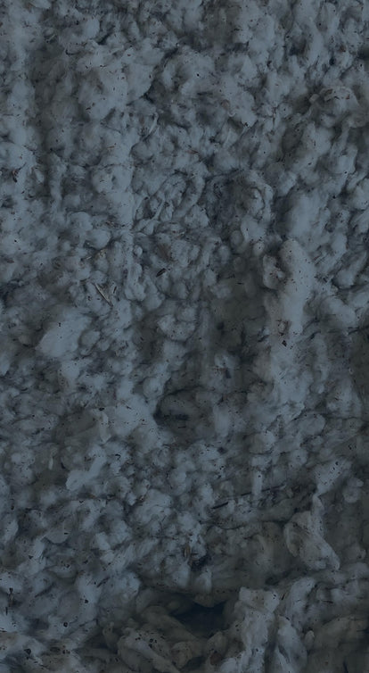 Extreme close-up of raw cotton fibre.