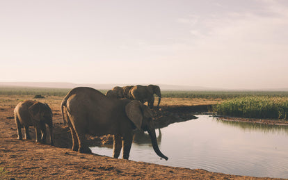 Several elephants around a watering hole.