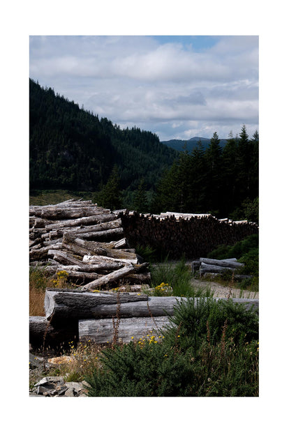 Timber logs in a Scottish forest