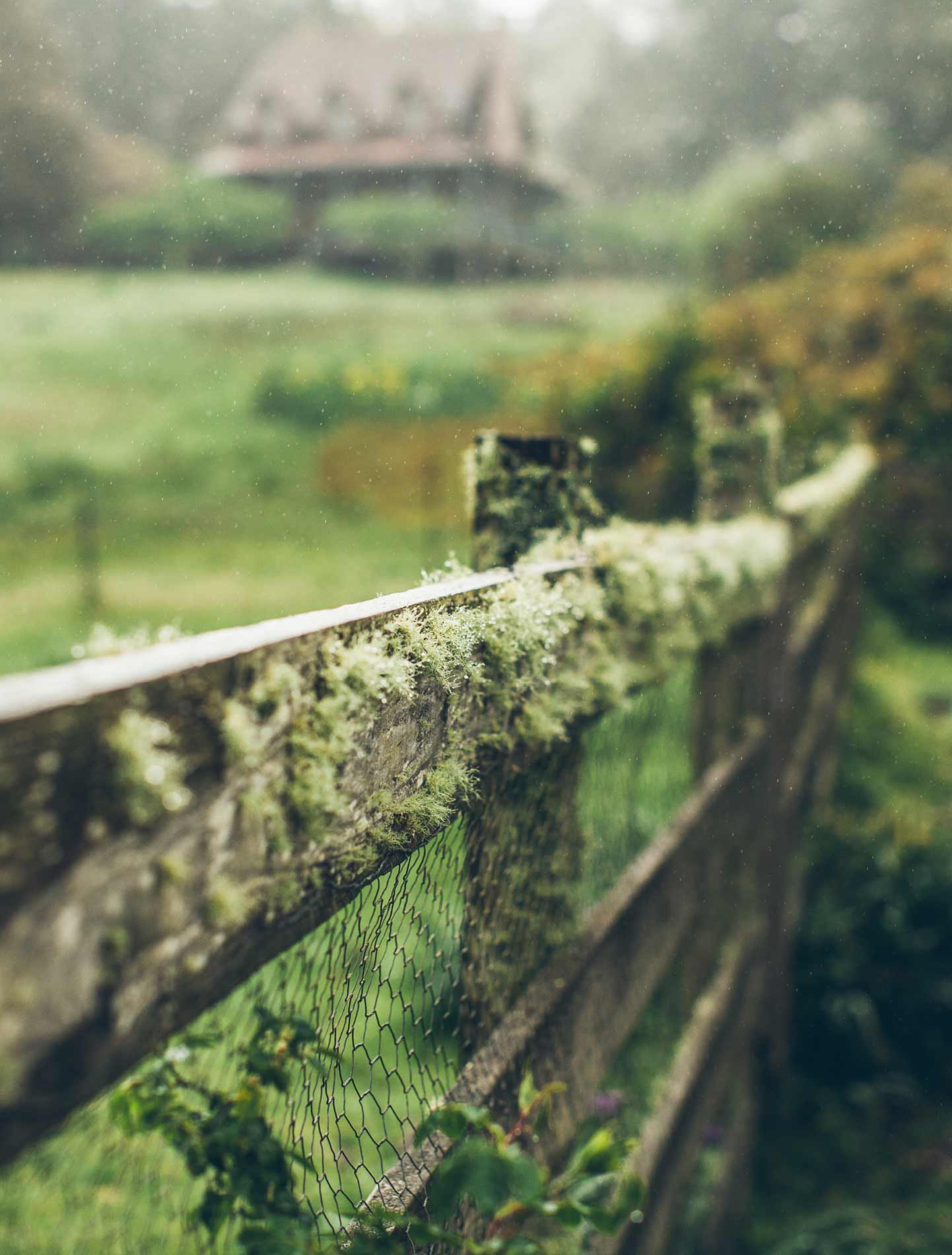 A mossy fence.